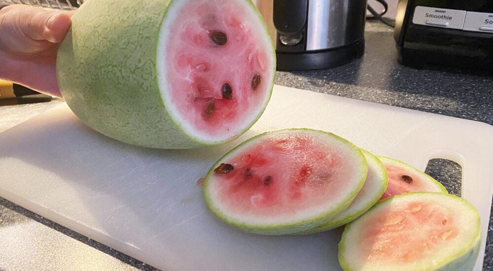 Min första melon